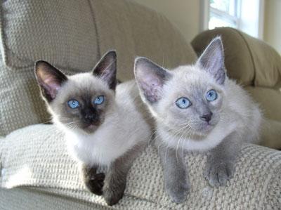 Jasper and Tinker