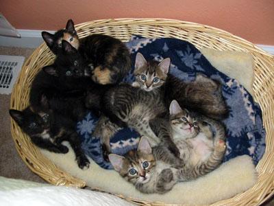 Panda, Tippy, Kittyhawk, Sugarfoot, Tony and Spot