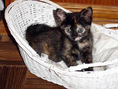 Tootsie Roll Kitty