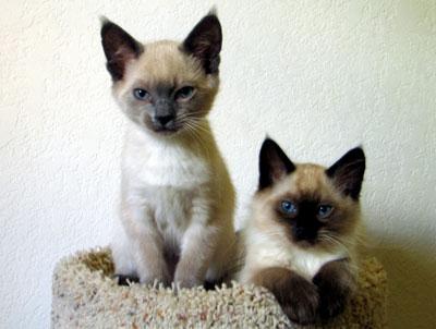 Blue & Loki