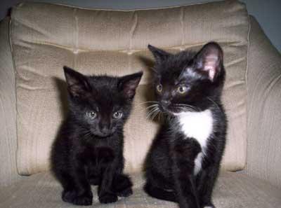 Romy & Fiona