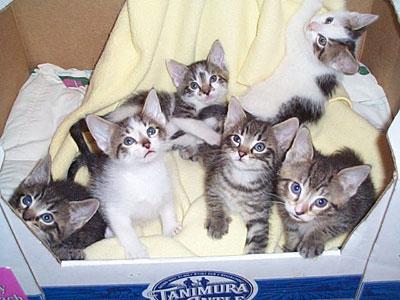 Janie, Jake, Jay, Jack, Jasper, & Jasmine