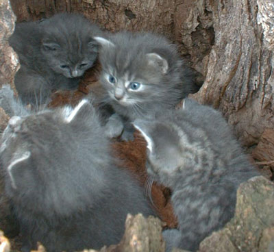 Feral kittens in a hollow tree
