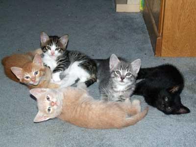 Calvin, Hobbes, Shane, Olivia and Boo