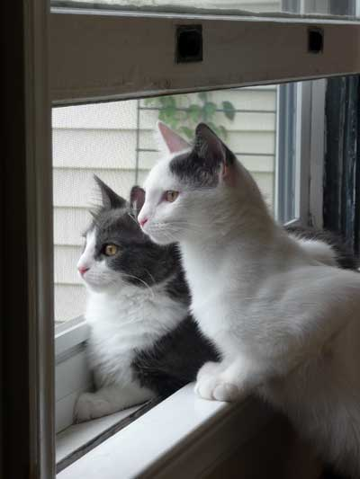 Jasper & Felix