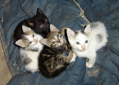 Inky, Yogurt, Byron and Snowflake