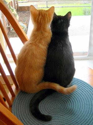 Calypso & Chico