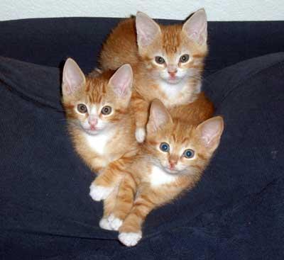 Piper, Pele & Pascha