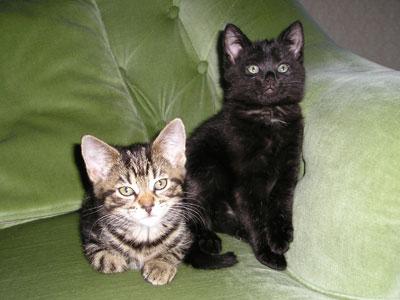 Phoebe and Heidi
