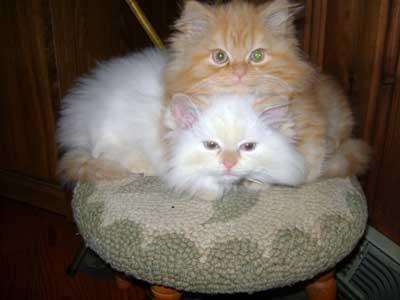 Frankie & Geno