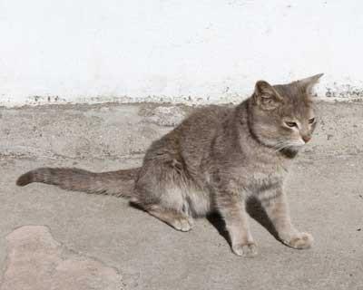 Unknown Kitten