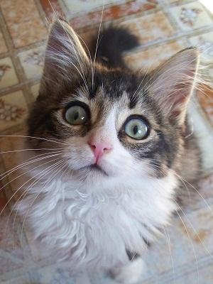 halo the daily kitten