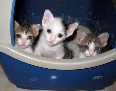 Patch, Nelson & Ziggy