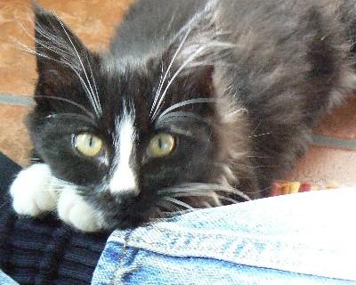"""Little Kitten (aka """"Taylor"""")"""
