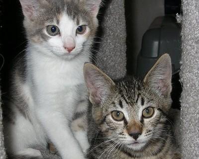 Tyger and Rosie