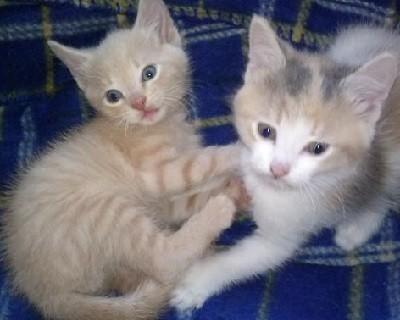 Daisy and Petal
