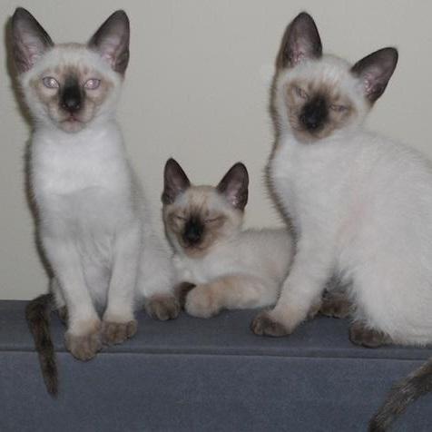 Hewie, Dewie and Louie