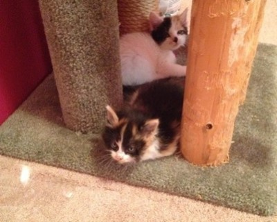 Polly and Callie
