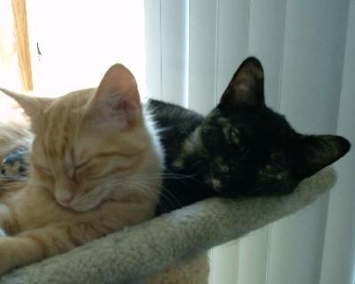 Gus and Sadie