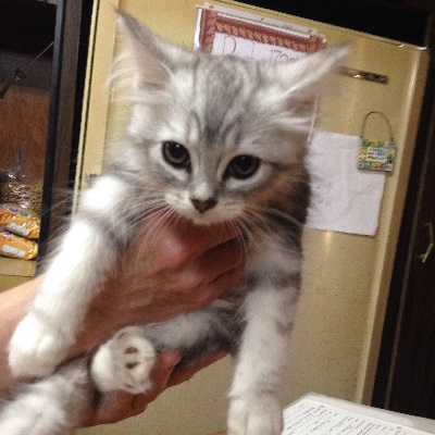 - Daily Atty The Mizer Kitten Able