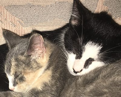 Timmy and Missy