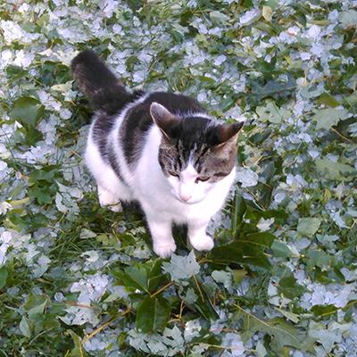 Fraidycat