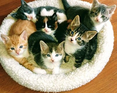 Minnie, Garfield, Coltrane, Skeeter, Ruby and Wyatt