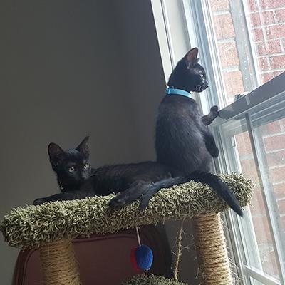 Smokey and Spooky
