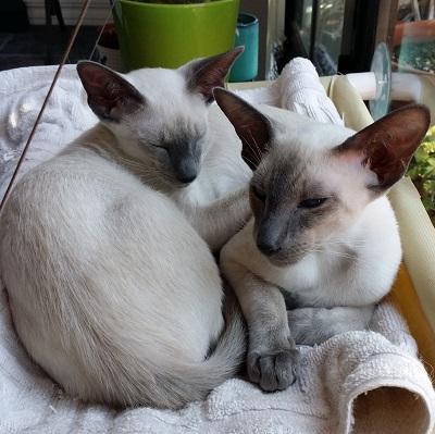 Leia & Bodhi