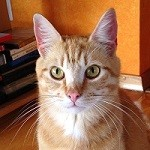 """Profile picture of Tom """"The Kittenmaster"""" Cooper"""