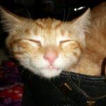 Profile photo of Karma kitten
