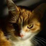 Profile picture of Stella Ferguson