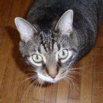 Profile picture of Brigitte