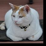 Profile picture of prairiecat