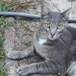 Profile picture of svance2011