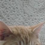 Profile photo of friendofkitty